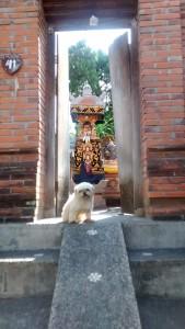 Een van de vele tempels in Bali voorzien van rampen