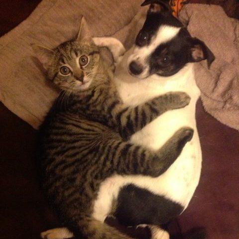 Hond en kat knuffelen in de zetel