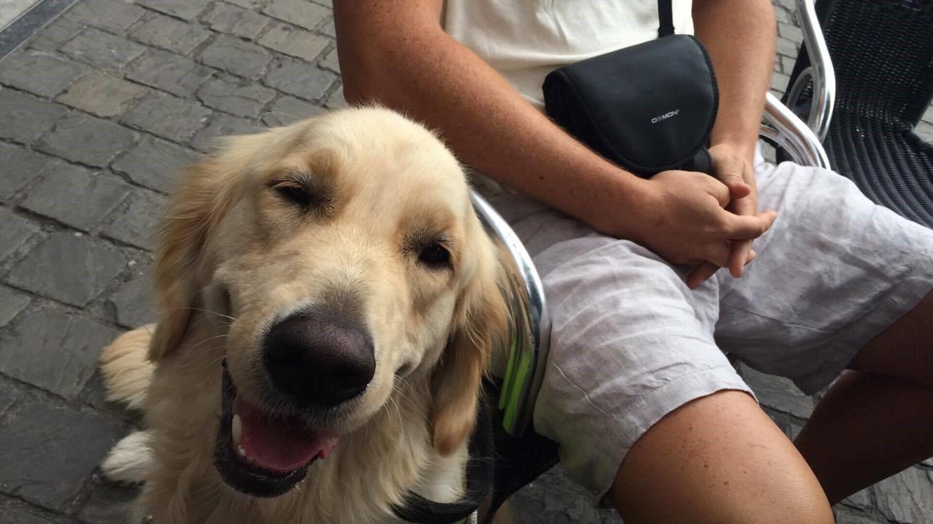 met beperking een hulphond