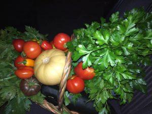 Verse groenten uit volkstuintje